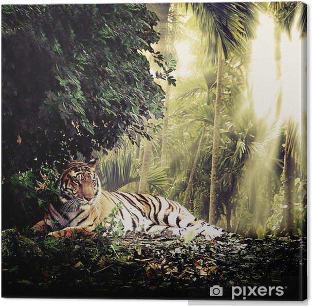 Tiger Fotolærred -