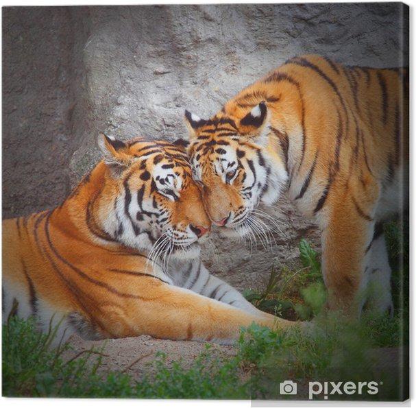 Tigers par Kærlighed i naturen. Fotolærred -