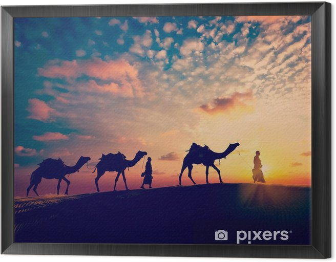 Two cameleers (camel drivers) with camels in dunes of desert Framed Canvas - Sports