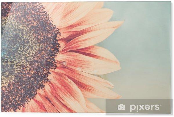 Impressão em vidro Tiro macro de girassol florescendo - Plantas e Flores
