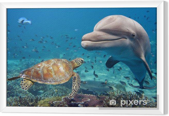 Delfin og skildpadde under vand på rev Indrammet fotolærred -