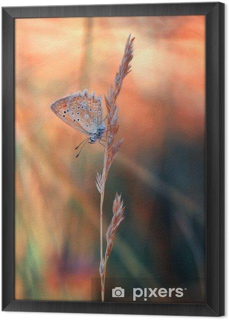 Ingelijst Canvas Butterfly - Dieren
