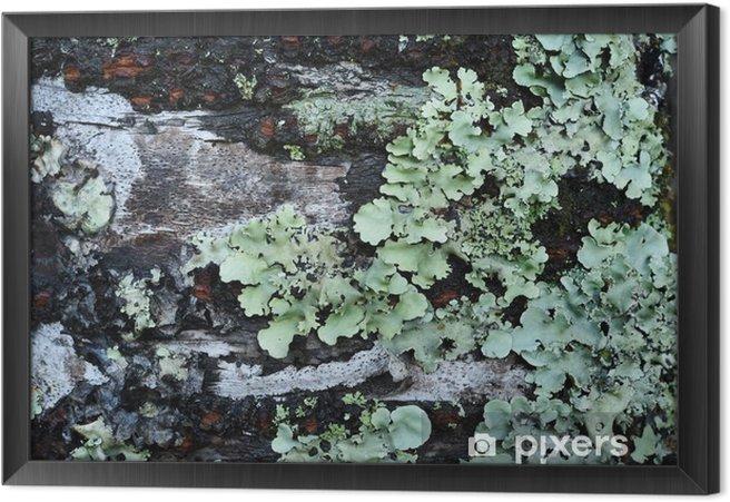Ingelijst Canvas Details van de natuur voor de achtergrond - Landschappen