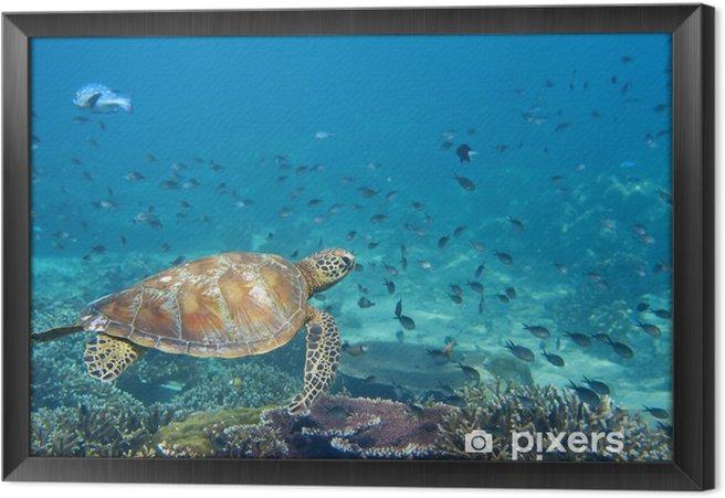 Ingelijst Canvas Een zeeschildpad portret close-up, terwijl op zoek naar jou - Vis