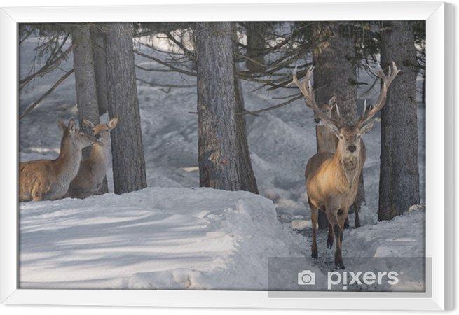 Ingelijst Canvas Herten op de achtergrond van de sneeuw - Thema's