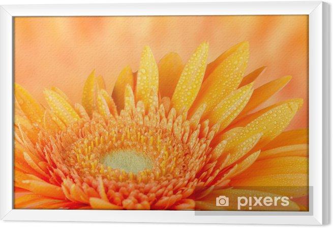 Ingelijst Canvas Oranje gerbera daisy - Bloemen