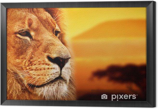 Ingelijst Canvas Portret van de leeuw op de savanne. Kilimanjaro bij zonsondergang. Safari -