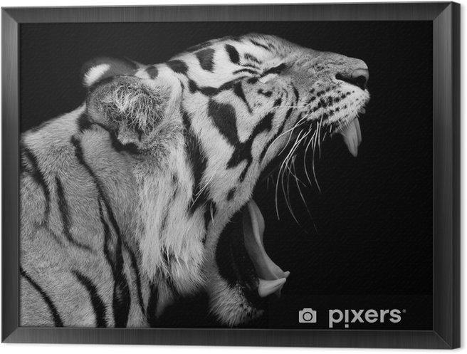 Ingelijst Canvas Sumatraanse tijger Roaring - Bestemmingen