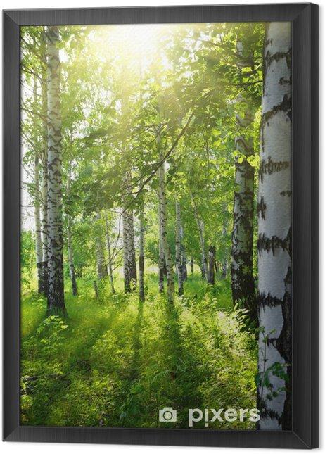Ingelijst Canvas Zomer berkenbossen met zon - Bestemmingen