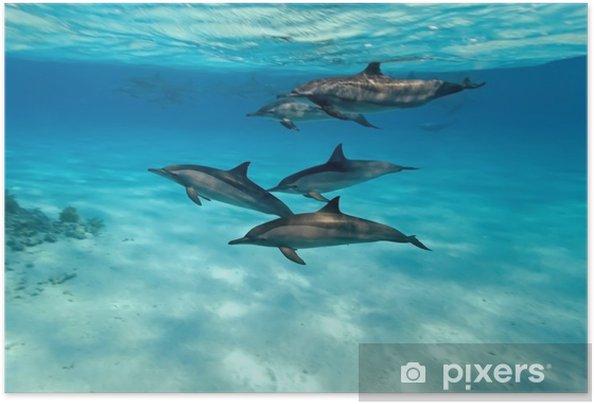 Delfiinejä meressä Itsestäänkiinnittyvä juliste -