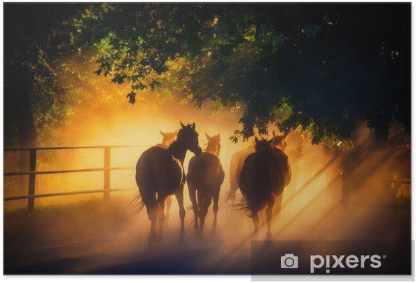 Hevoset Itsestäänkiinnittyvä juliste - Eläimet