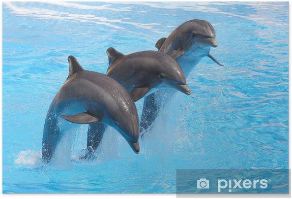 Trio delfiinejä Itsestäänkiinnittyvä juliste -