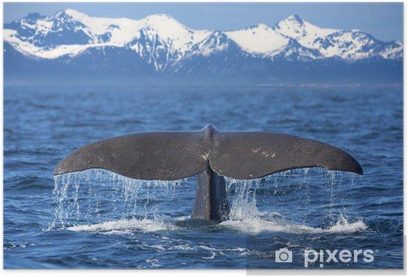 Valaanhäntä Itsestäänkiinnittyvä juliste -