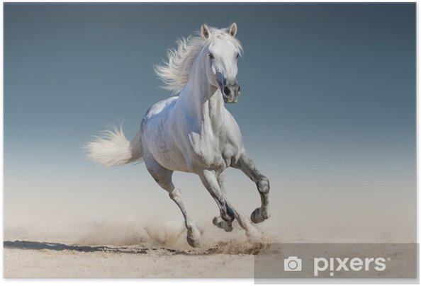 Valkoinen hevonen ajaa galoppia Itsestäänkiinnittyvä juliste - Eläimet