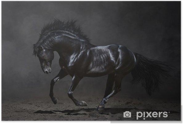 Galoppinen musta hevonen tummalla pohjalla Juliste -