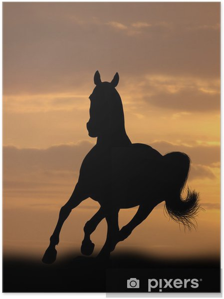 Hevonen auringonnousussa Juliste - Nisäkkäät