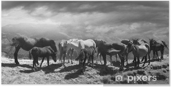 Hevoset vuoren huipulla Juliste - Eläimet
