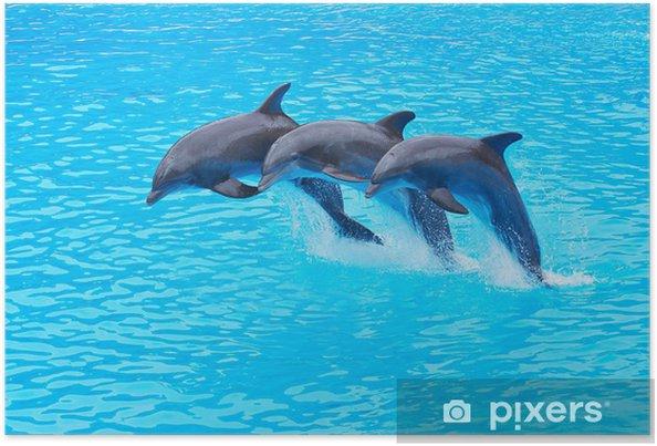 Hyppäämällä tyydyttävät delfiinit, tursiops truncatus Juliste -
