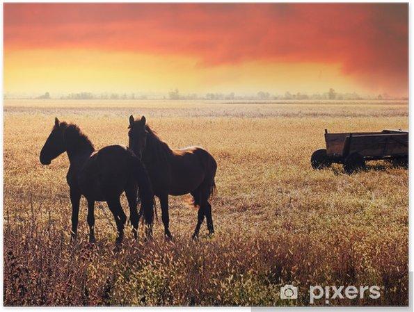 Kaksi hevosta ranchissa auringonlaskussa Juliste - Eläimet