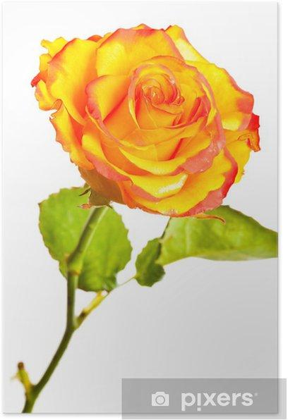 seksiä mysen panoseuraa ruusu keltainen
