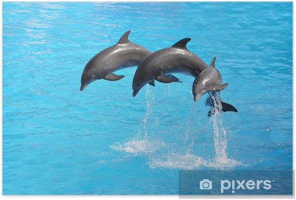 Kolme delfiinistä Juliste -