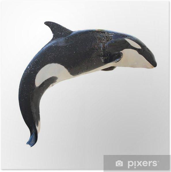 Leaping Killer Whale, Orcinus Orca Juliste - Seinätarra