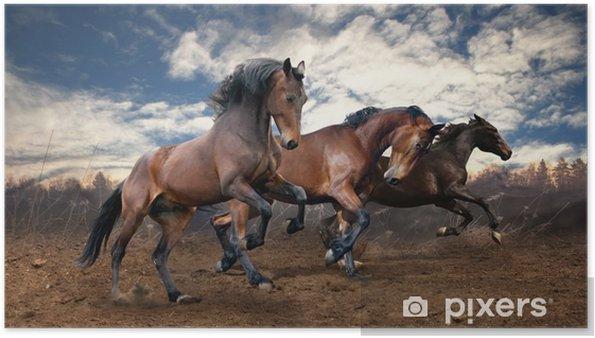 Luonnonvaraisten hyppyrilajien hevoset Juliste -