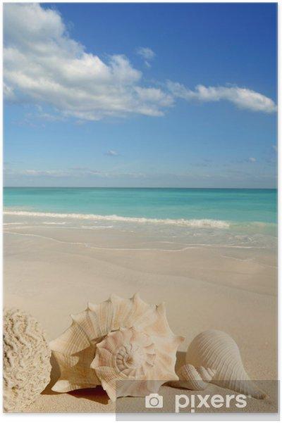 Merikuvut meritähti trooppinen hiekka turkoosi karibia Juliste - Amerikka