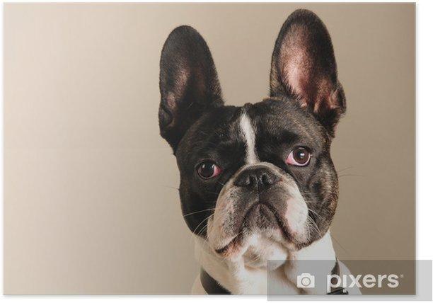 Ranskanbulldoggi Juliste Pixers Elamme Muutoksille