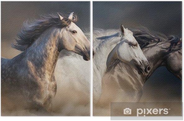 Hevoset, joilla on pitkäkarvainen muotokuva, ajautuvat aavikkopölyyn Kaksiosainen - Eläimet