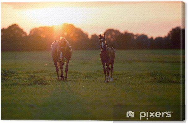 Äitihevos, jolla on varsa maatilalla auringonlaskun aikaan. Geesteren. achter Kangaskuva - Eläimet