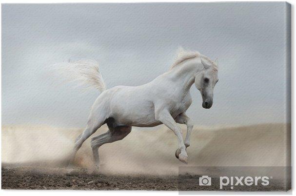 Arabilainen hevonen Kangaskuva -