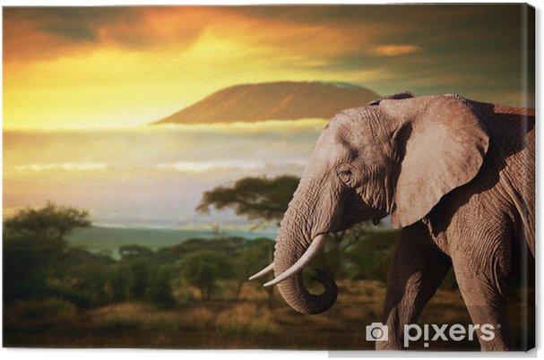 Elefantti savannasta. mount kilimanjaro auringonlaskun aikaan. safari Kangaskuva -