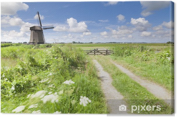 Hollantilainen tuulimylly tuoreessa vihreässä kentässä kesällä Kangaskuva - Vuodenajat