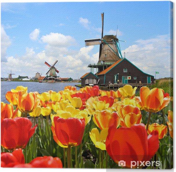 Hollantilaiset tuulimyllyt, tulppaanit at zaanse schans, alankomaat Kangaskuva - Mills and windmills