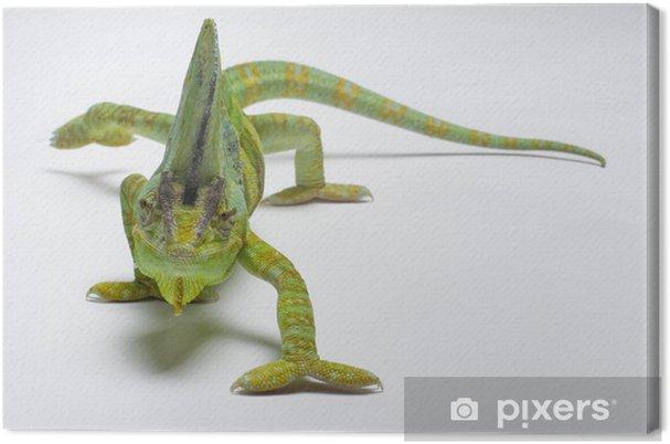 Kameleontti Kangaskuva -