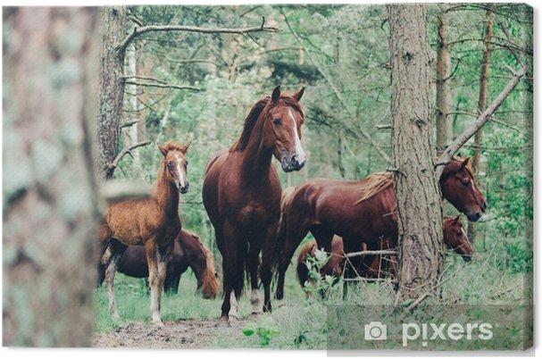 Karja ruskeiden hevosten kävelyä vihreää metsää. Kangaskuva - Eläimet