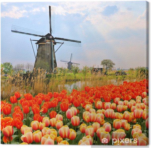 Klassiset hollantilainen tuulimyllyt, tulppaanit ja auringonsäteet, alankomaat Kangaskuva - Mills and windmills