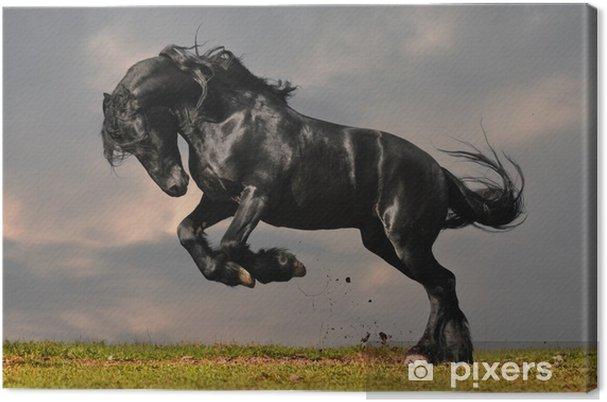 Musta friesian ori gallop auringonlaskussa Kangaskuva -