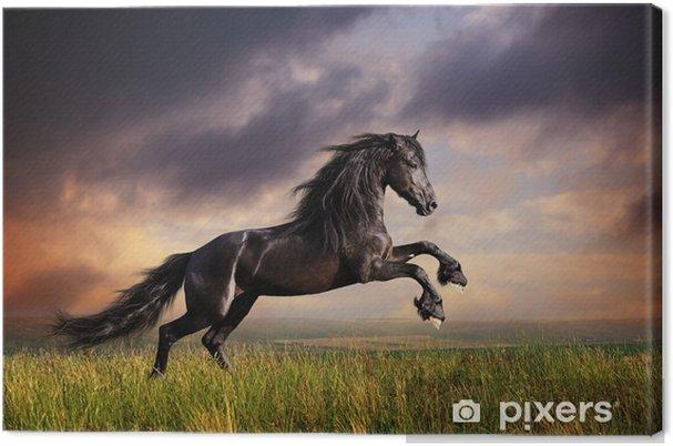 Musta friisi hevonen laukka Kangaskuva -