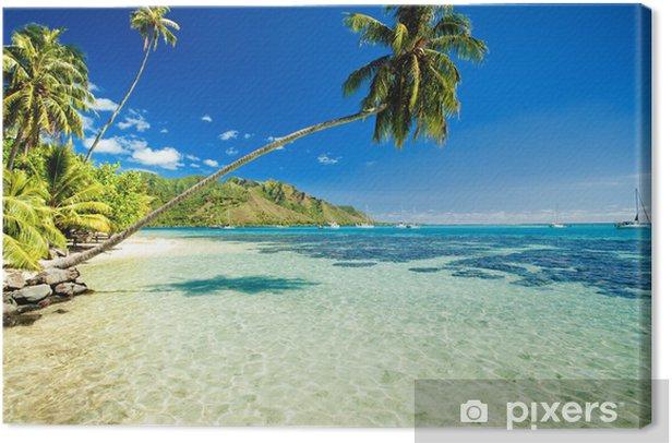 Palmu roikkui upeaan laguuniin Kangaskuva -