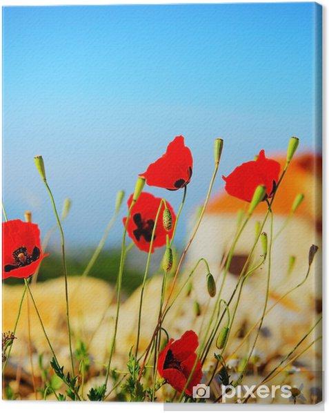 Poppy kukat niitty Kangaskuva - Kukat