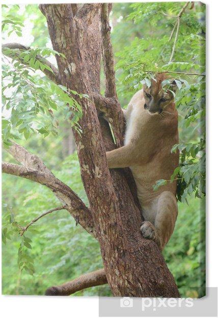 Puma kiipeää puu Kangaskuva - Nisäkkäät