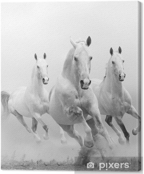 Valkoiset hevoset pölyssä Kangaskuva -