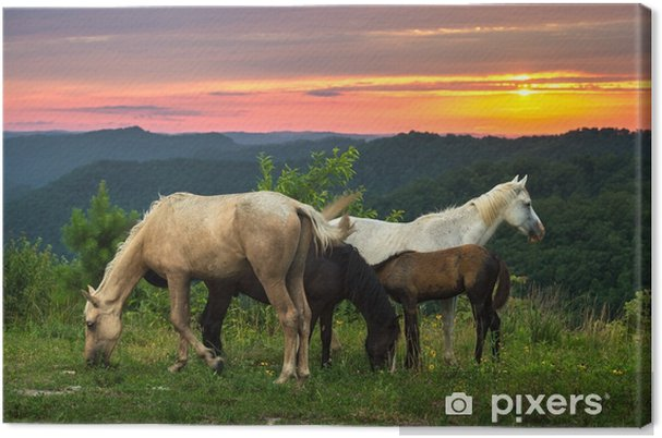 Vapaa valikoima hevosia ja luonnonkaunis auringonlasku, kentucky Kangaskuva - Eläimet