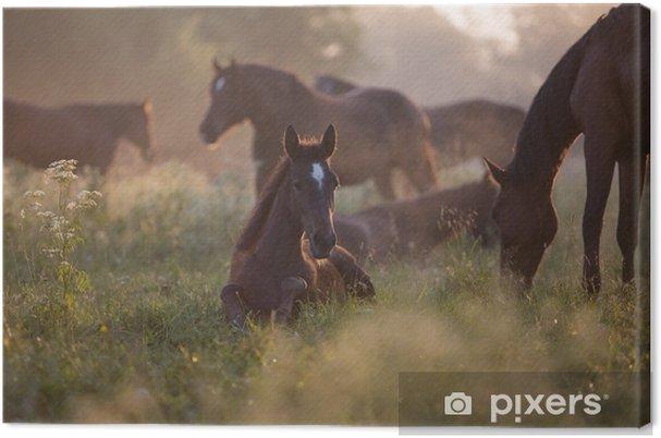 Varsa aamunkoitteessa Kangaskuva - Eläimet