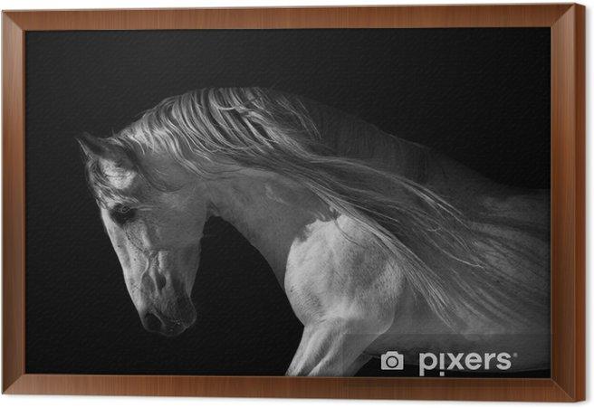 Hevosen muotokuva tummalla pohjalla Kehystetty kangaskuva -