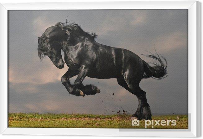Musta friesian ori gallop auringonlaskussa Kehystetty kangaskuva -