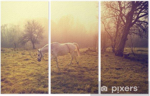 Kaunis valkoinen hevonen Kolmiosainen - Eläimet