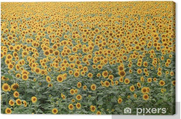 Leinwandbild 柳川 ひ ま わ り 畑 - Jahreszeiten
